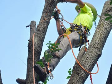 tree cabling lafayette